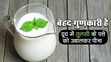 Health Tips: बेहद गुणकारी है दूध में तुलसी के पत्ते को उबालकर पीना, नजदीक नहीं आएंगे ये रोग