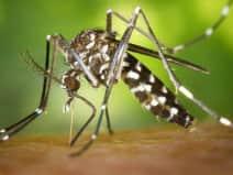 यूपी के इस जिले में पाले जा रहे मच्छर, मलेरिया फैलाने के आरोप में 180 लोगों को नोटिस