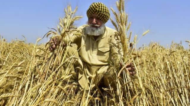 पीएम किसान सम्मान निधि की 8वीं किस्त के लिए फौरन चेक करें स्टेटस, अगर लिखा है ऐसा तो जरूर मिलेगा पैसा