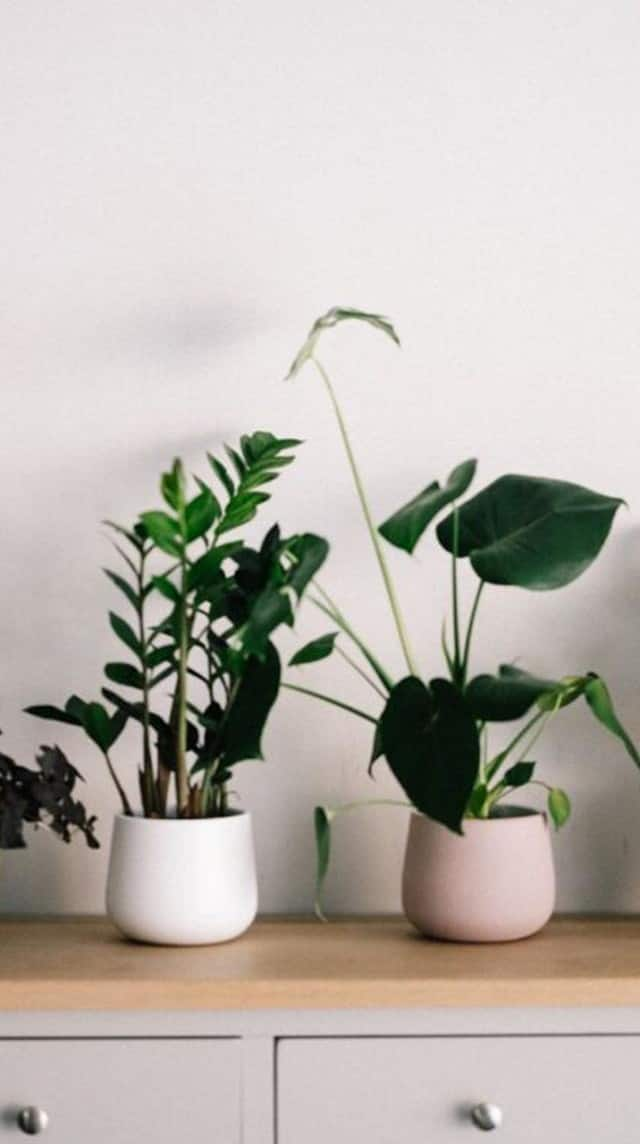 10 indoor plants for a green touch