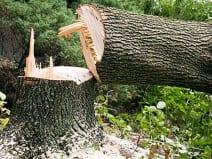 दो पेड़ काटने पर आदिवासी युवक पर लगा 1.2 करोड़ का जुर्माना, गिरफ्तार