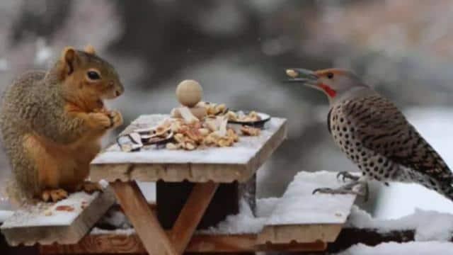 पिकनिक मनाते गिलहरी और पक्षी, वायरल Photo देख यूजर् बोले- सो क्यूट