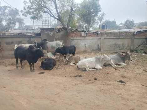 पशु चिकित्सालय में गंदगी आवारा पशुओं ने जमाया डेरा